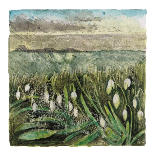 Week 5. Watercolour; Snowdrops on the north boundary wall.