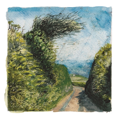 Week 27. Watercolour; Both sides of the hedge.