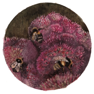 Week 38. Watercolour; Bumble bees Bombus terrestris.